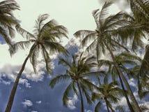 Cielo delle nuvole delle palme immagini stock libere da diritti