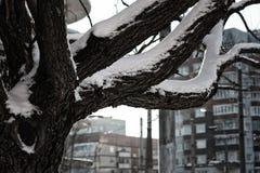 Cielo desnudo del invierno del abedul del árbol Fotos de archivo