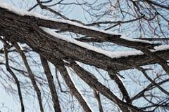 Cielo desnudo del invierno del abedul del árbol Foto de archivo libre de regalías