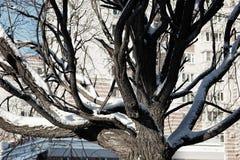 Cielo desnudo del invierno del abedul del árbol Imagenes de archivo