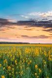 Cielo di alba di tramonto sopra l'orizzonte del Canola di fioritura della primavera, seme di ravizzone Fotografia Stock Libera da Diritti