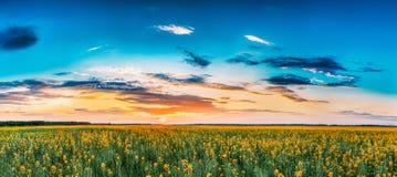 Cielo di alba di tramonto sopra l'orizzonte del Canola di fioritura della primavera, seme di ravizzone Fotografia Stock