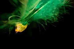 Cielo di anima dell'uccello Fotografie Stock
