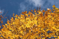 cielo di autunno fotografie stock