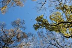 Cielo di autunno Immagini Stock Libere da Diritti