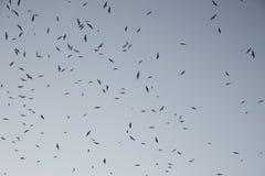 Cielo di Birds& Fotografie Stock