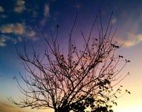 Cielo di colore Fotografia Stock Libera da Diritti