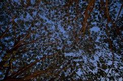 Cielo di crepuscolo sotto l'albero Immagine Stock