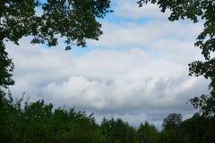 Cielo di estate incorniciato dai verdi immagine stock