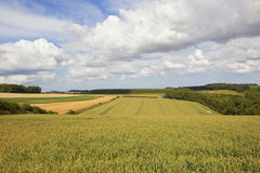 Cielo di estate sopra i giacimenti di grano dei wolds di Yorkshire Immagini Stock
