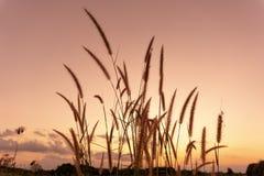 Cielo di gennaio sul fondo di tramonto fotografia stock