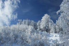 Cielo di giorno soleggiato Fotografie Stock