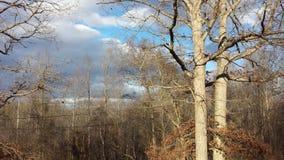 Cielo 1 di inverno fotografia stock