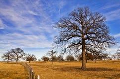 Cielo di inverno del Texas Immagine Stock