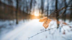 Cielo di inverno dell'Ungheria fotografia stock