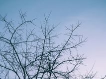 Cielo di inverno e rami scarni Fotografia Stock Libera da Diritti