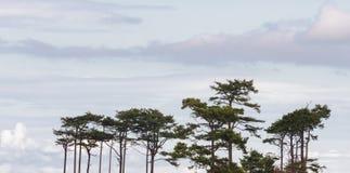 Cielo di mattina delle nuvole e delle cime dell'albero Fotografia Stock Libera da Diritti
