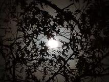 Cielo di mezzanotte fotografia stock libera da diritti