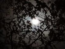 Cielo di mezzanotte Immagine Stock Libera da Diritti