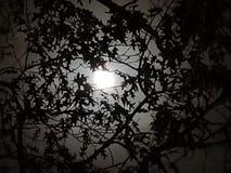 Cielo di mezzanotte Immagini Stock Libere da Diritti