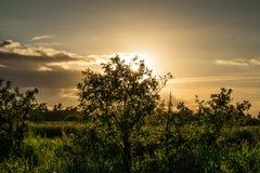 Cielo di oro Fotografia Stock