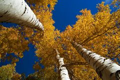 Cielo di ottobre immagini stock libere da diritti