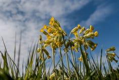 Cielo di primavera odorosa Immagine Stock