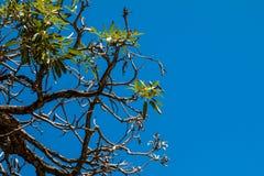 Cielo dietro l'albero fotografie stock libere da diritti