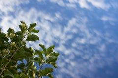 Cielo dinámico con las nubes foto de archivo