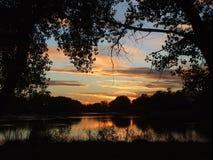 Cielo dorato con le siluette dell'albero Immagine Stock
