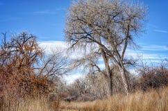 Cielo dramático del invierno sobre el bosque del Cottonwood en el parque de estado del pueblo del lago foto de archivo