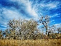Cielo dramático del invierno sobre el bosque del Cottonwood en el parque de estado del pueblo del lago Fotografía de archivo