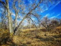 Cielo dramático del invierno sobre el bosque del Cottonwood en el parque de estado del pueblo del lago Foto de archivo libre de regalías