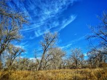 Cielo dramático del invierno sobre el bosque del Cottonwood en el parque de estado del pueblo del lago Imagen de archivo libre de regalías