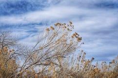 Cielo dramático del invierno sobre la pradera en el parque de estado del pueblo del lago fotografía de archivo libre de regalías