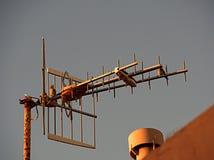Cielo dramático en la puesta del sol con la antena y el pájaro fotos de archivo libres de regalías