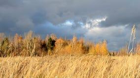 Cielo dramático Nubes oscuras pesadas Hierba amarilla seca encendida por las oscilaciones del sol en el viento Autumn Landscape E almacen de metraje de vídeo