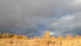 Cielo dramático Nubes oscuras pesadas Hierba amarilla seca encendida por las oscilaciones del sol en el viento Autumn Landscape E metrajes