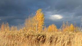 Cielo dramático Nubes oscuras pesadas Hierba amarilla seca encendida por las oscilaciones del sol en el viento Autumn Landscape E almacen de video
