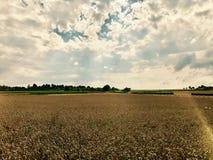 Cielo drammatico sopra il campo di grano Fotografia Stock Libera da Diritti