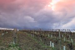 Cielo drammatico sulla vigna in Aude, Occitanie nel sud della Francia Fotografia Stock Libera da Diritti