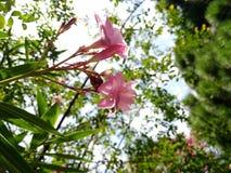 cielo e fiori Fotografia Stock Libera da Diritti
