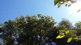 Cielo e grande albero Fotografia Stock