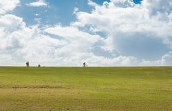 Cielo e hierba imagen de archivo