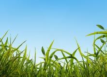 Cielo e hierba Foto de archivo