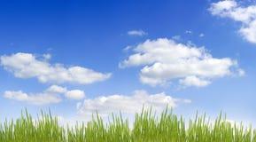Cielo e hierba Imágenes de archivo libres de regalías