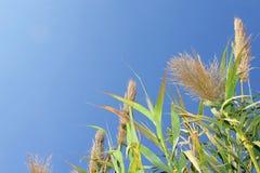 Cielo e hierba Fotos de archivo