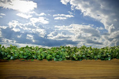 Cielo e hierba verde en el fondo de madera del suelo Imagen de archivo