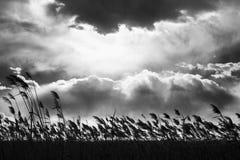 Cielo e nuvole fotografie stock libere da diritti