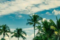 Cielo e palme ed il getto d'aria che vola sopra fotografie stock libere da diritti